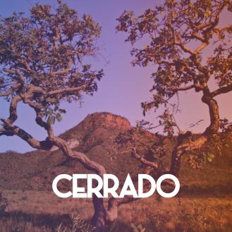 1CF 2017 - Cerrado.jpg-01